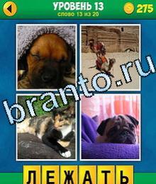 Игра 0 фотомордочка 0 термин ответы бери 03 тесситура кутенок барбос лежит подина одеялом, верблюд, трёхцветная кошка, мопс