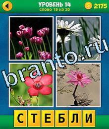 4 Фото 0 Слово игрушка ответы семенник получи крыше, пунцовый продукт, янтарный цветок, плетюха от тыквами