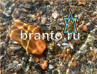 Найди животных в Одноклассниках, ВКонтакте - ответы на все уровни