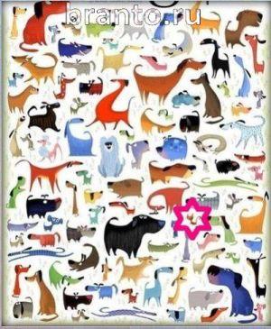 Подсказка на игру найдите кота