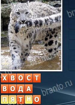 Игра в одноклассниках кот ответы собираем слова 2