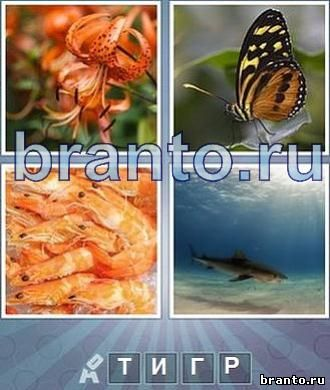 Что за слово: цветок, бабочка, креветки, акула, 4 буквы