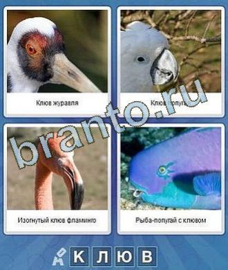 что за слово одноклассники ответы птица попугай фламинго