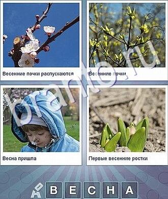 яблоня цветёт, мальчик, росток