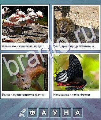 фламинго, лев, белка, бабочка