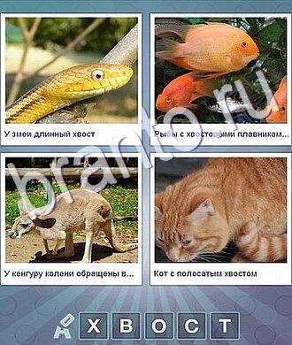 Ответы на все уровни Что за слово: желтая змея, рыбка, кенгуру, рыжий кот