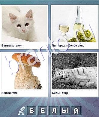 котенок, бутылка вина и виноград, гриб, тигр