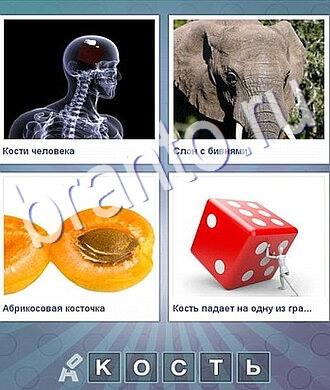 что за слово ответы скелет, слон, абрикос, персик, игральный кубик