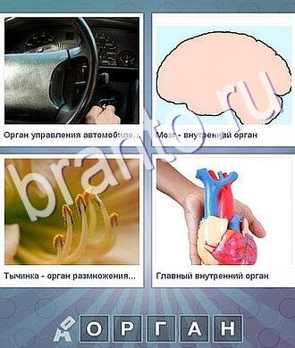 Подсказки для игры Что за слово? 5 букв: руль, мозг, тычинки или пестики, сердце