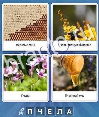 прохождение игры что за слово 5 букв: соты, мёд, пчела, шмель