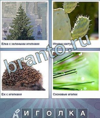 ответы в картинках: елка, кактус, ежик и какое-то растение