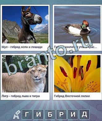 Что общего между - осёл, утка, тигр, лилия 6 букв