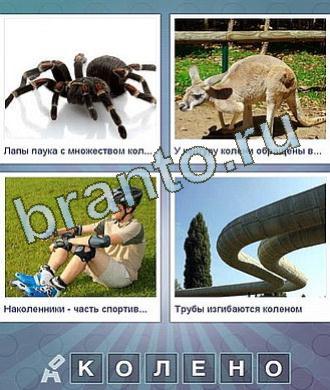 Что за слово, 6 букв: паук, кенгуру, парень на роликах, трубы