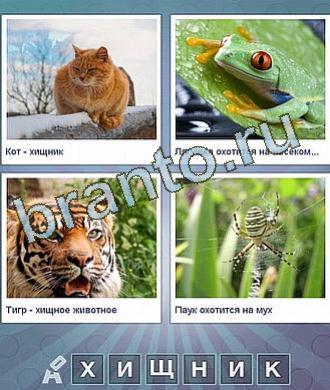 рыжий кот, лягушка, тигр, паук