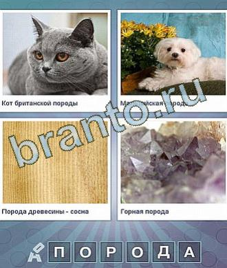 Что за слово ответы - кот, собака, пол и стекло