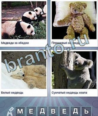 Что за слово панда и куча медведей
