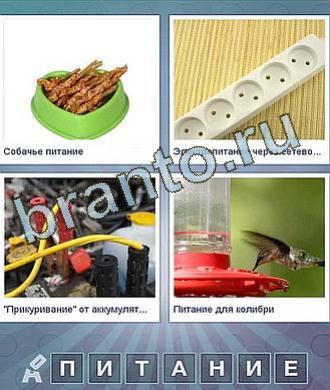 Что за слово сборник ответов: еда в миске, удлинитель, провода, птица