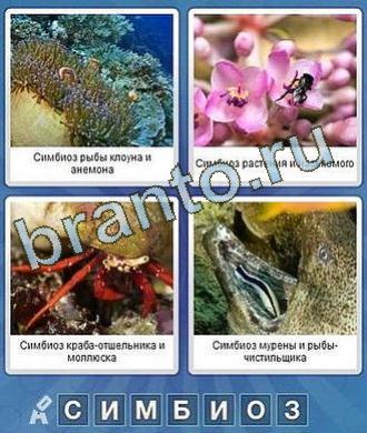 Что за слово ответы коралл, оса (пчела), краб, рыбы