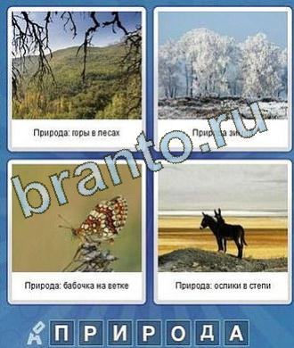 ветки, деревья в снегу, бабочка, ослы, лошади