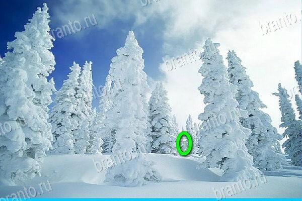 Снились грибы под снегом